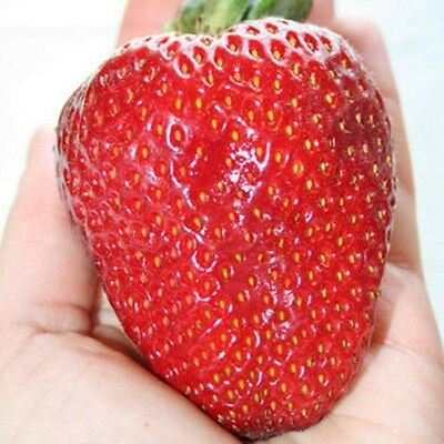 315pcs Giant Red Strawberry Seeds, Garden Fruit Plant, Rare And Delicious