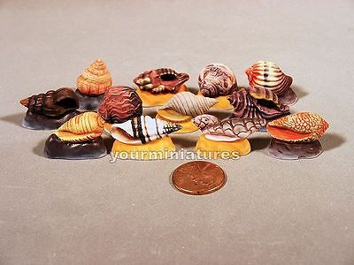 Miniature Porcelain Seashell Sea Shell Collection 1 Matte Finish French Feves