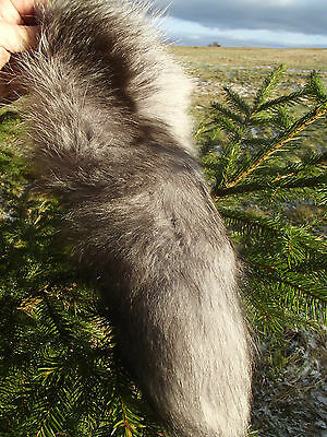 Real Fox Fur Large Fluffy Tail Taxidermy
