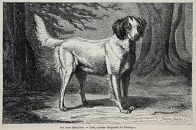Dog French Spaniel or Brittany Spaniel (Named), 1870s Antique Engraving Print