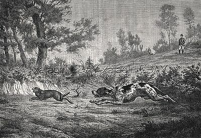 Dog German Shorthaired Pointer, Large 1870s Antique Engraving Print & Article