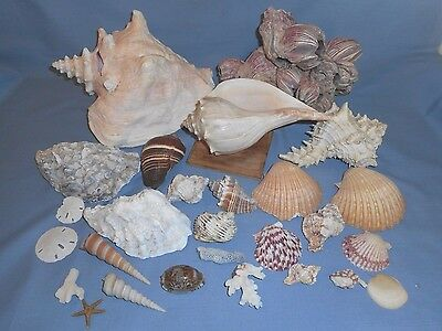 Lot of 28 Sea Shells-Conch Shell-Whelk-Barnacle Shells+Oyster+Lots of Others