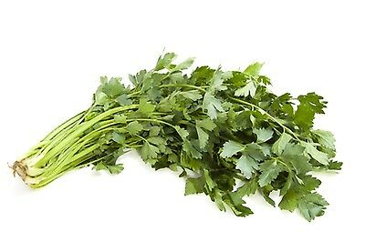 Packet of Thai Coriander Seeds, CORIANDRUM SATIVUM, Pak Chee, Thai Cilantro