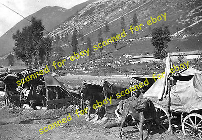 WW1 photo - Austrian Army dog carts, Isonzo
