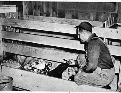 Article Plans How To Build Make Farrowing Crate For Pigs Hog Farmer  Farmin #86