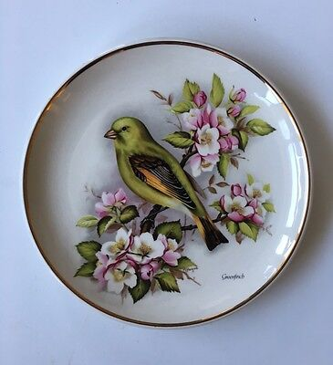 Vintage Prinknash Pottery Bird Plate - Greenfinch