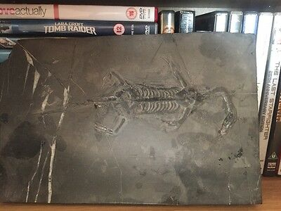 Dinosaur Fossil. Originally From China.