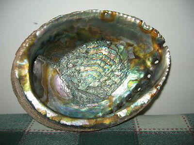Large Abalone Shell 7.25 x 5.25 Irridescent Rainbow Mother of Pearl Smudge Bowl