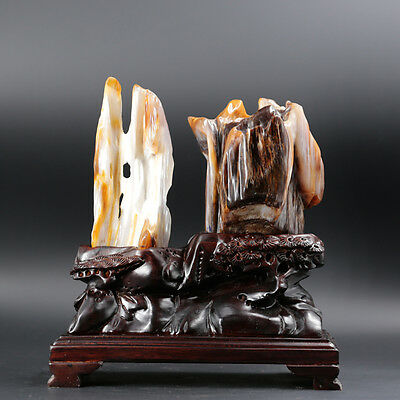 PETRIFIED WOOD FOSSIL Polish Crystal Gem Quality Display Specimen Bonsai Suiseki