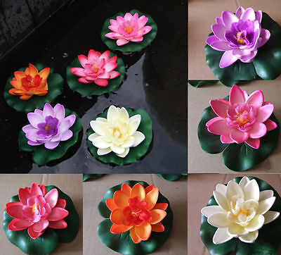 5 Color Mix Bowl Lotus Flower Seed water Aquatic Plants Nelumbo NEW