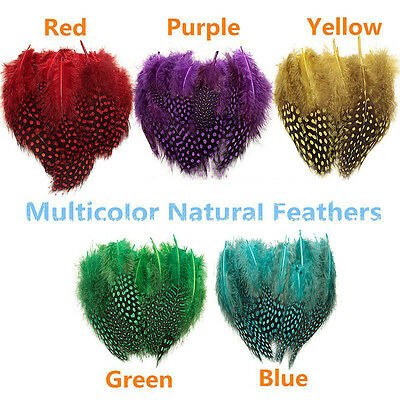 50x Natural Spotted Guinea Fowl Feather Craft Costume Millinery Sewing DIY