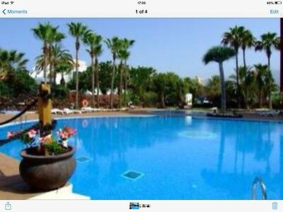 Tenerife Apartment Playa las Americas Available 16 May To 20 June