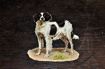 Vintage Victorian Circa early 1900's Die Cut of Handsome Dog