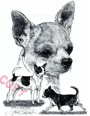 Chihuahua Limited Edition Print by Lyn St.Clair