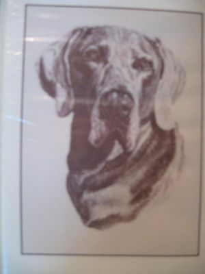 Weimaraner Note Cards by Chris Lewis Brown - Pk of 6 cards