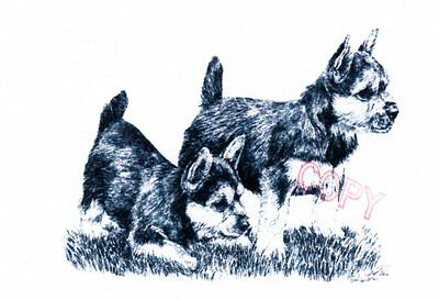 Norwich Terrier Limited Edition Print by Lyn St.Clair