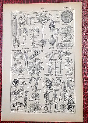 Vintage French Dictionary original image Plants flowers leaves roots berries