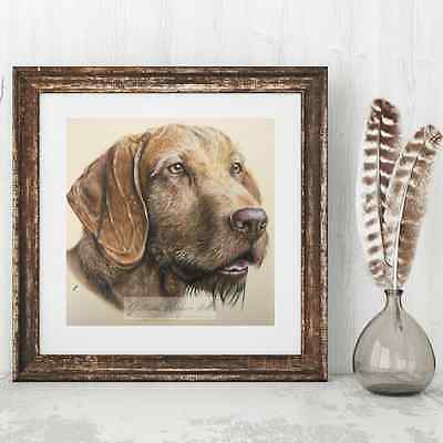 "Hungarian Wirehaired Vizsla Portrait Fine Art Giclee Print 12"" x 12"""