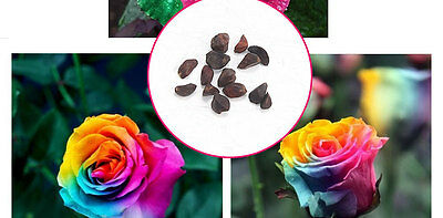10pcs Colorful Rose Flower Plant Seeds Gift for Friends