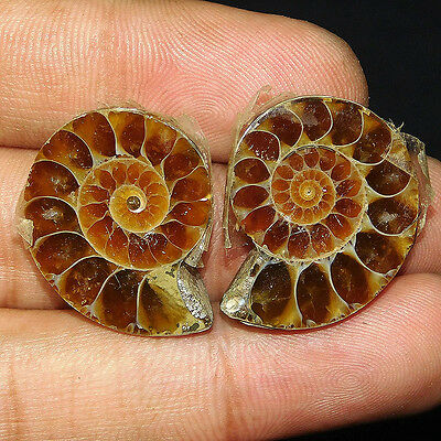 50.5Cts 100% NATURAL AWESOME AMMONITE PAIR  25X20 LOOSE CAB GEMSTONE UN370
