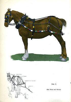 A Charming print of a canal boat HORSE & HARNESS