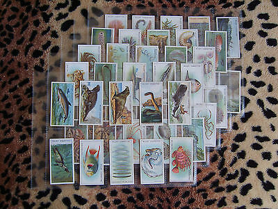 Cigarette Card : Wills : Wonders of the Sea (1928) : Full Set