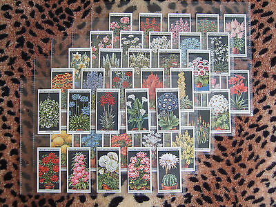 Cigarette Card : Wills : Flower Culture In Pots (1925) : Full Set