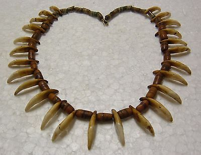 """COYOTE CANINE TOOTH NECKLACE 25 teeth 20 inches long """"NR"""""""