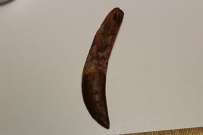 COMPLETE DELTADROMEUS AGILIS FOSSIL DINOSAUR TOOTH MOROCCO RAPTOR Massive Rooted