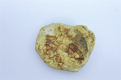 Baltic white amber large fossil specimen natural raw rough rare pure (C)