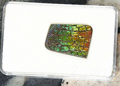 SALE AA Grade Natural Ammolite Stone, Extremely rare all colours Genuine 15 x 21