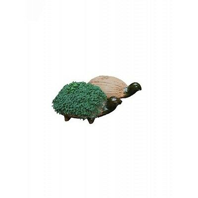 Grow your own Turtle! Fun Eco Activity, Quirky Fun Gift