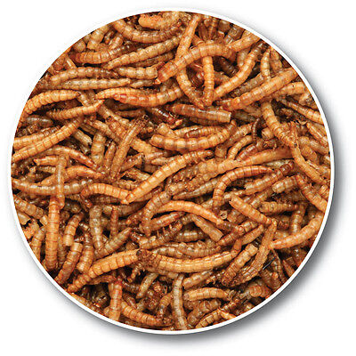 Wild Bird Dried Mealworms High Quality 1 Litre Tub