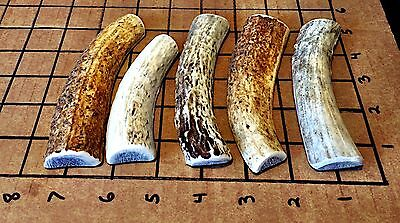 5 Small Elk/Deer Split Antler Dog Chew...HARD MARROW...Free Shipping...durable!