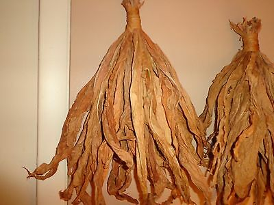 Old World Style Tobacco Hand - Hanging Decorative Bunch - Kentucky Burley