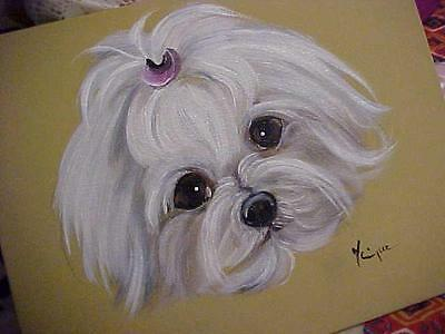 Find Your Maltese Original Painting New Offerings!