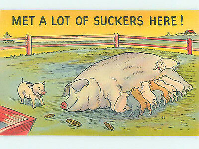 Pre-Chrome comic LOTS OF SUCKERS - PIGLET PIGS WITH HOG HJ2051