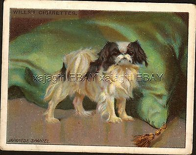 DOG Japanese Chin Spaniel, Antique 1915 Trading Card