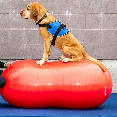 FitPAWS Peanut Canine Stability Ball