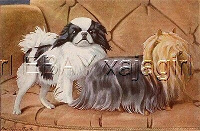 DOG JAPANESE CHIN Spaniel Lovely 85+ Year Old Antique Print