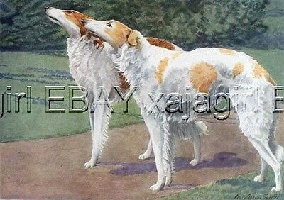 DOG BORZOI Russian Wolfhound, 85+ Yr Old ANTIQUE Print