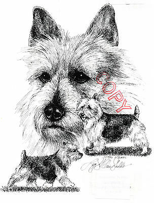 Australian Terrier Limited Edition Print by Lyn St.Clair