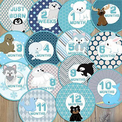 14 Arctic Animals Fox Whale Orca Penguin Walrus Baby Monthly Milestone Stickers