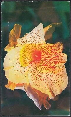 1994-Ep-40 Antilles Caribbean 1994 Flowersperiodo Especial Card Mother Day Flore