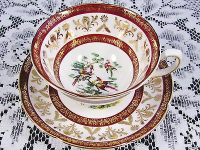 Royal Grafton Exotic Birds Fancy Gold Red Tea Cup And Saucer