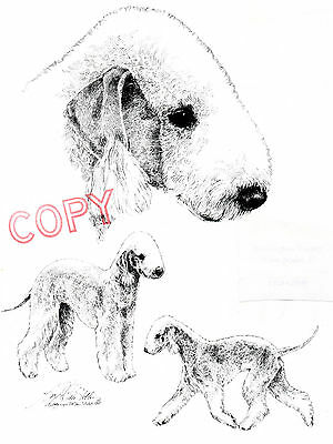 Bedlington Terrier 2 Limited Edition Print by Lyn St.Clair 2