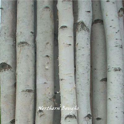4 Thick White Birch Poles 4'