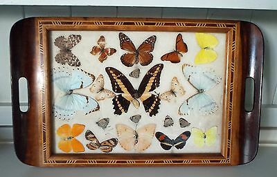 Vintage Butterfly Wing Tray