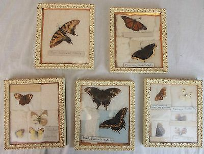 Butterfly Collection in Set of 5 Frames