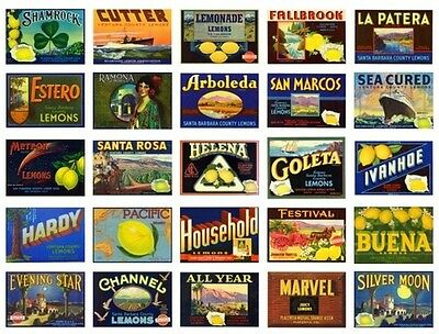 Lot Of 25 Vintage California Lemon Crate Labels 1930-1960 Wholesale Advertising